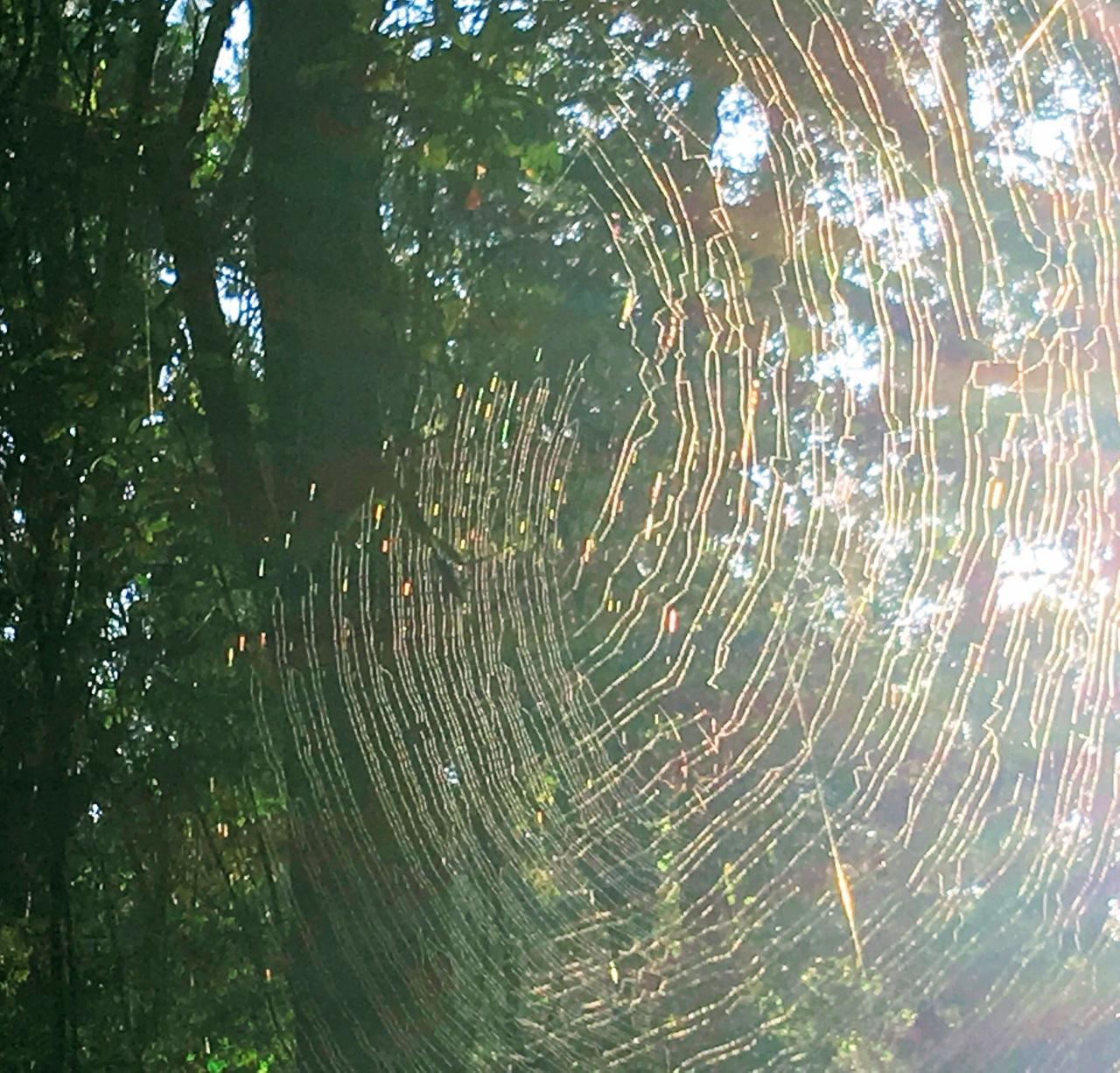 Orb-weaver's web.