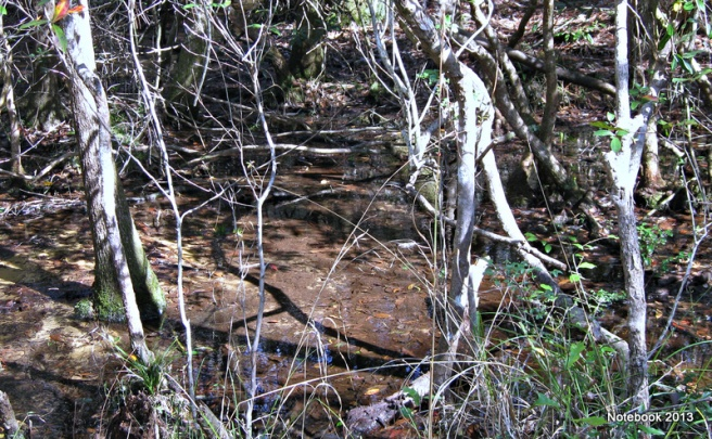 Shadow of a twisted branch in the shallow stream bed at Longleaf in February, 2013.
