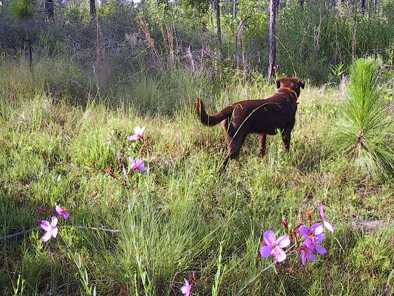 Morning flowers & Maggie 6-22-04 020