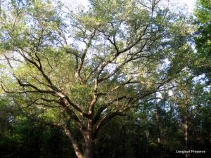Sun-dappled oak