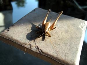 Bug 8-30-08