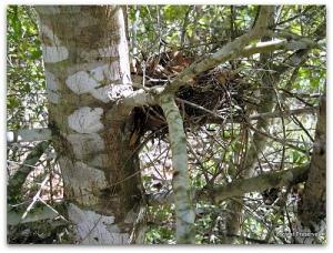 Nest (picknik)